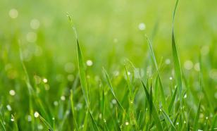 Использование песка для газонов