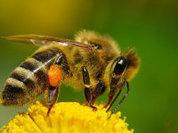 Пчелы Вергилия в назидание обществу
