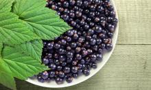 Советы для хорошего урожая смородины