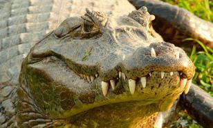 В американском Диснейленде аллигатор утащил ребенка