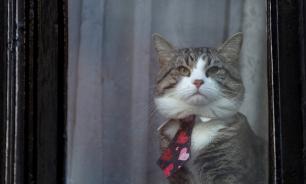 Сотрудники посольства Эквадора прояснили судьбу кота Ассанжа
