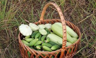 Как правильно выращивать патиссоны