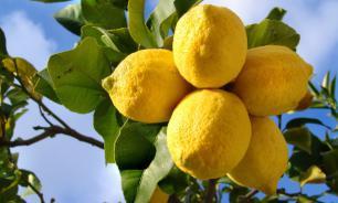 Врачи рассказали о пользе лимона для печени и почек