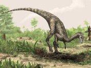 Дедушка динозавров был родом с юга