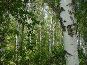 Дачник — злейший враг подмосковных лесов?