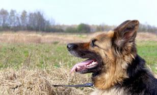 У собаки неприятный запах изо рта? Тому есть три причины