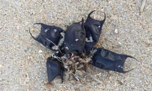 """""""Дьявольские"""" сумки на пляже оказались яйцами ромбовых скатов"""