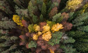 Европейское лицемерие: уничтожая леса, Европа считает себя климатическим лидером