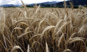 У аграриев по субсидиям на кредиты вопросов нет, как и самих кредитов - АККОР