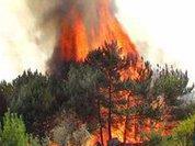 Лесные пожары снова напомнили о себе