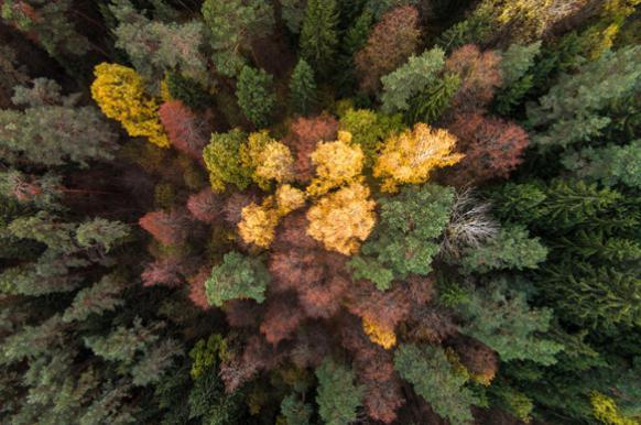"""Россия не будет ограничивать экспорт леса в Китай из-за """"черных вырубок"""""""