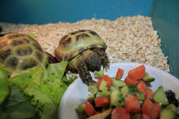 Уход за черепахами и их содержание