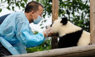 Туристам в Китае запрещено фотографироваться с пандами