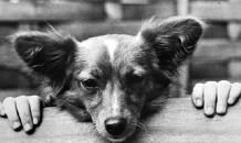 Жестокому обращению с животными детей учат... родители