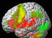 Язык может соврать, а мозг - никогда!