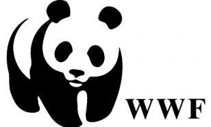 Основательница WWF погибла при обучении лошади