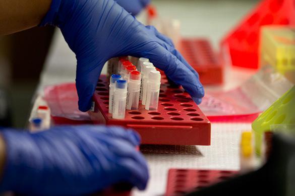 Ученые надеются, что от ВИЧ человечество смогут спасти коровы