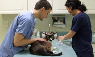 В Московской области откроются банк крови и база доноров домашних животных