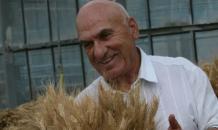 """Пшеница - наша вторая атомная бомба"""