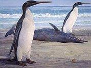 Собран древний пингвин. Не гигант