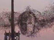 Птицы в небе над Нью-Йорком сложили портрет Владимира Путина. Видео