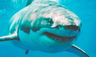 В Twitter появился аккаунт белой акулы по имени Брансуик