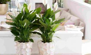 Десять растений для семейного счастья