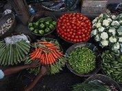 Россиян спасают от ГМО… дачи