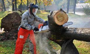 """""""Нет черным лесорубам"""": с Украины в ЕС вывезено 660 тыс тонн древесины"""
