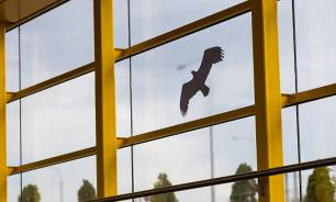 На стекла вестибюлей метро наклеили стикеры для отпугивания птиц