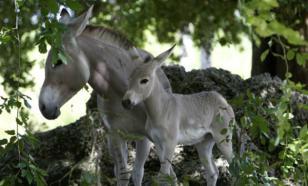 Биологи бьют тревогу: половина животных на Земле исчезнет уже к концу столетия