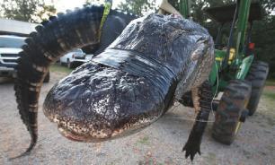 В США аллигаторы вмерзли в лед и впали в спячку