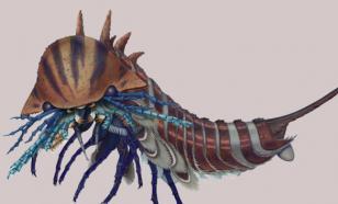Канадцы нашли древнего хищника размером с ноготок