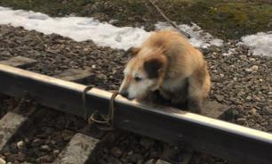 Россиянин, привязавший собаку к рельсам, рассказал о причинах своего поступка