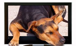 Ученые узнали, зачем собаки смотрят телевизор