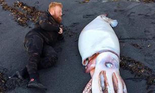 На побережье Новой Зеландии обнаружили 4-метрового кальмара