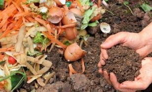 Неожиданные удобрения и подкормки на огороде
