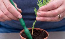 Украшаем дом хвойными растениями