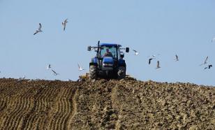Матушка-земля: учимся определять состав почвы на участке