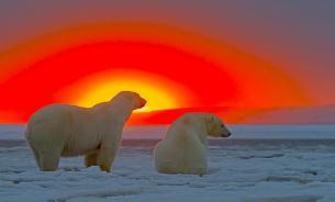 Арктика - колыбель человечества и политических интриг?