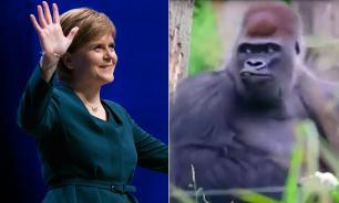Телеканал BBC перепутал премьера Шотландии с обезьяной. ВИДЕО
