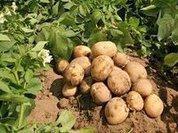 Ситуация с кредитами фермерам сейчас должна нормализоваться - источник