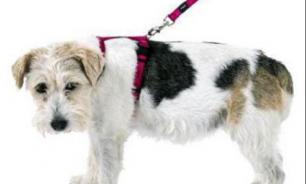 Виды поводков для собак: какой лучше