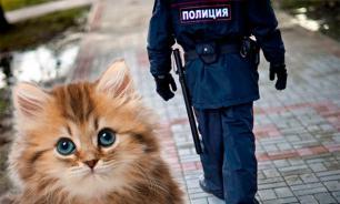 """Саперы Белгорода нашли """"бомбу"""" с котятами"""