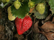Продуктам с ГМО приказали быть полезными