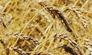 Нижегородских фермеров поддержат на федеральном уровне