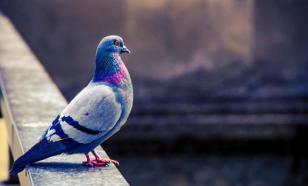 """""""Скоро конец света?"""": из регионов пишут о массовой гибели птиц"""