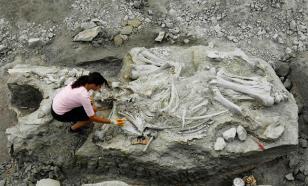 Туристы в Хакасии нашли кости мамонта