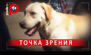 Собачья работа: Лучший пес-полицейский в Москве