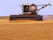 Минсельхоз ведет войну против сельского хозяйства